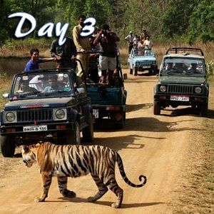 Ranthambore tiger safari at Day 3