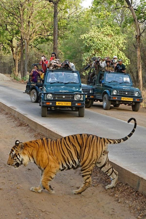 Tiger safari at Ranthambore